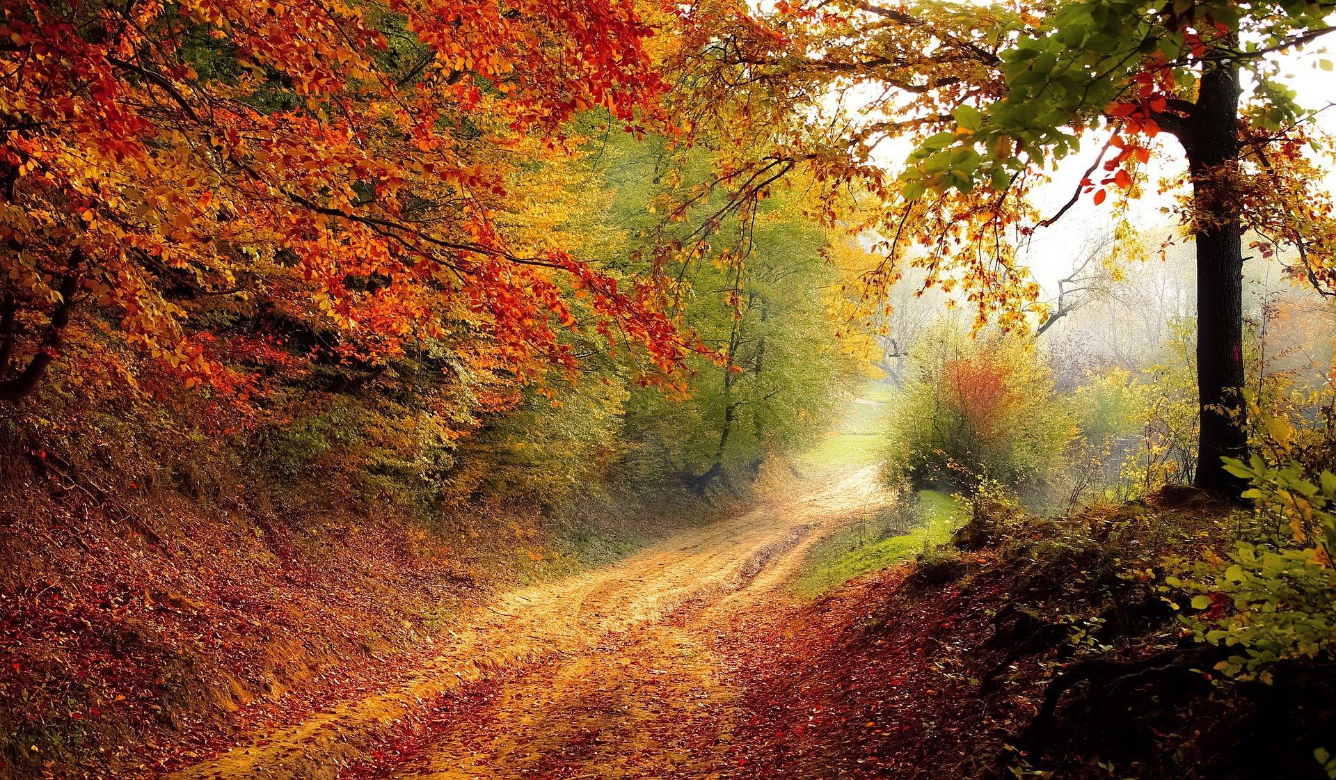 Wierszyk W Karzełkowie Jesień Złota Jesienne Wiersze I
