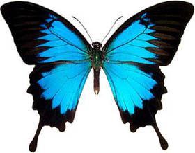 motyle warsztaty dla dzieci Zamek Królewski warszawa