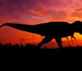 Noc z Dinozaurami w Krasiejowie