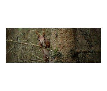 lesny ogrod botaniczny marszewo zielona szkoła, na powietrzu, ekologia, przyroda