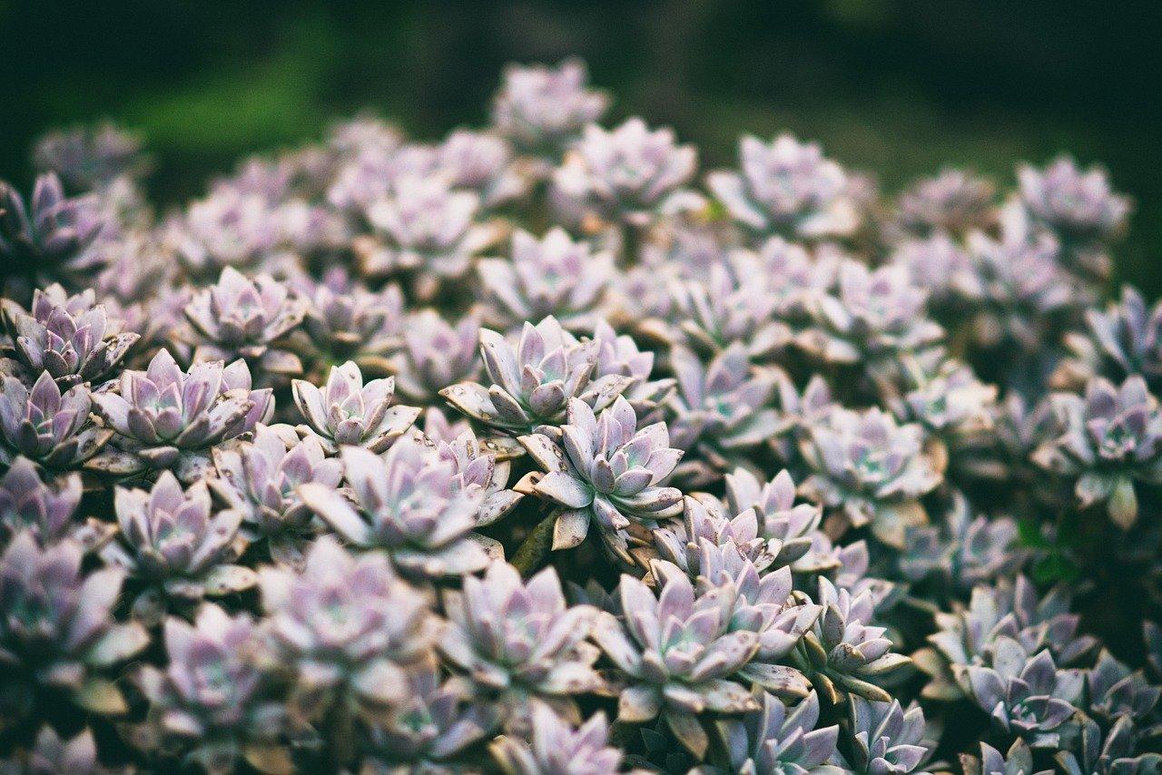 kwiaty ogród botaniczny