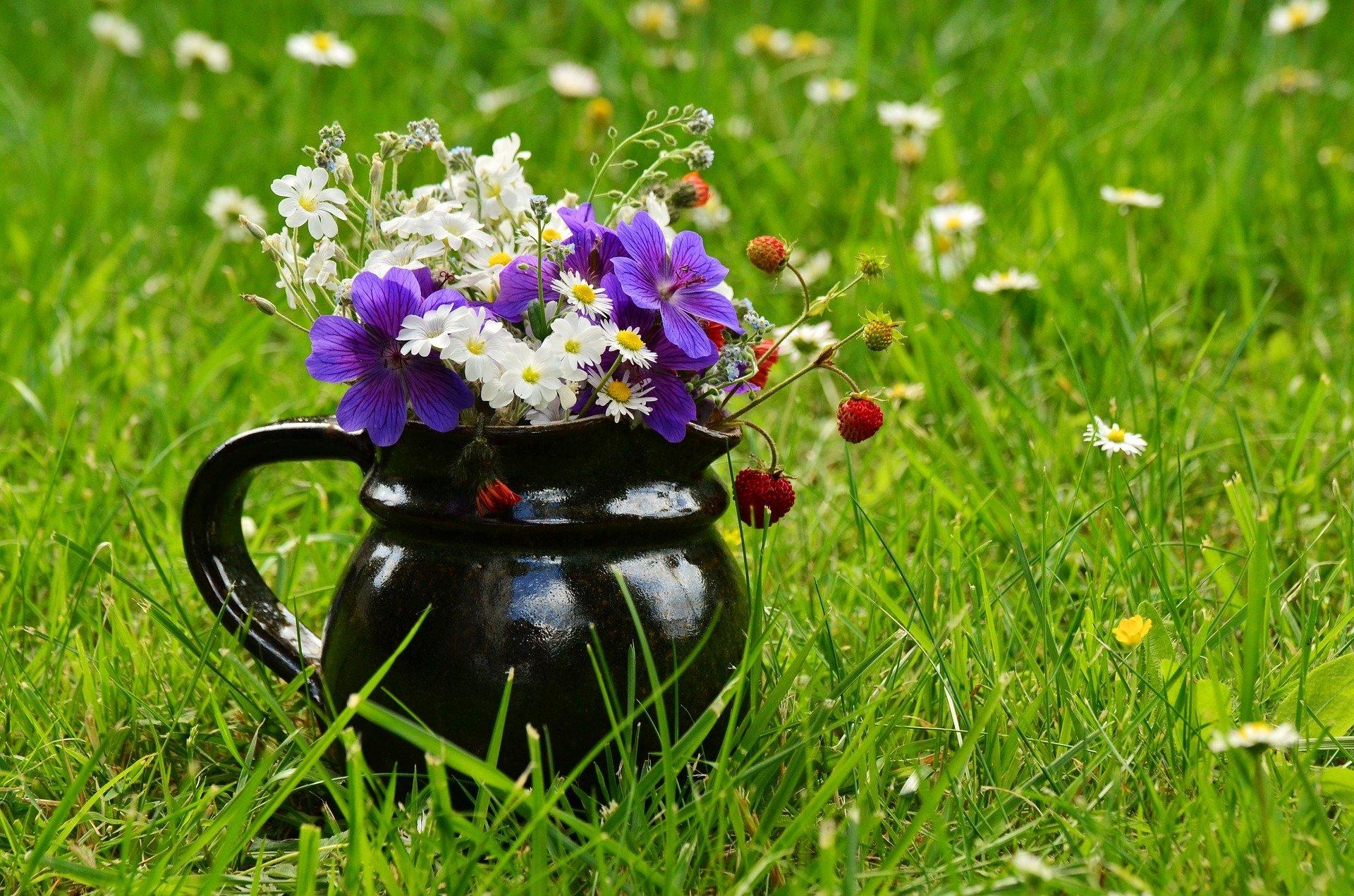 lato wazon łaka kwiaty pixabay