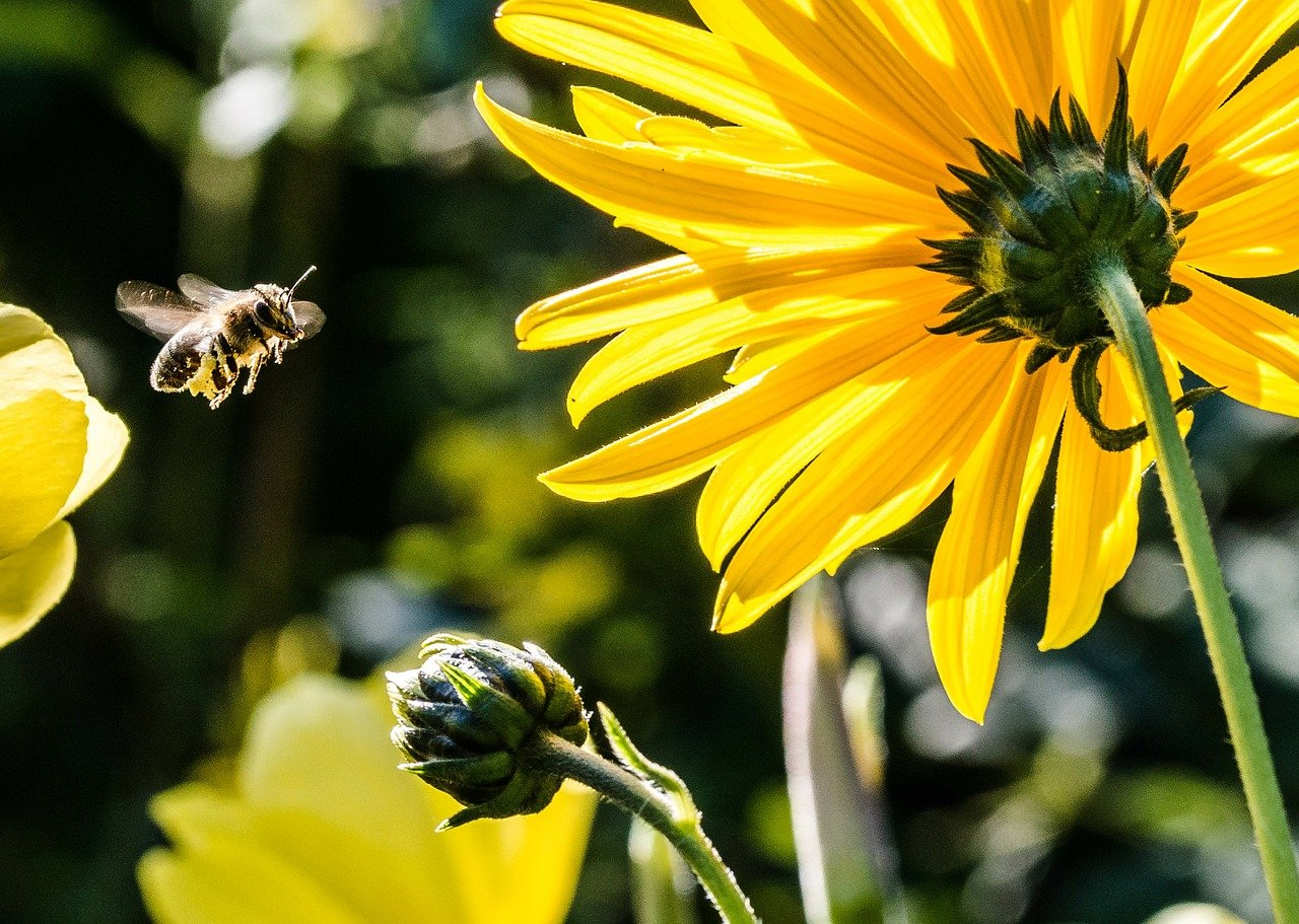 przygarnij pszczołę