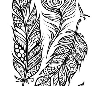 Pióra, kolorowanka dla dorosłych