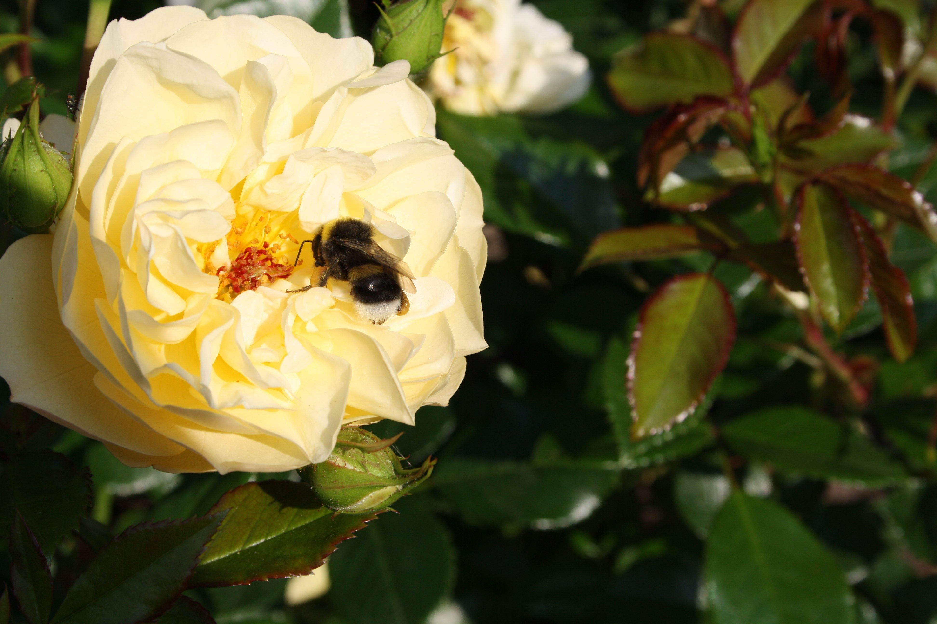 Botaniczny Warszawa Fot. Anna Szacillo