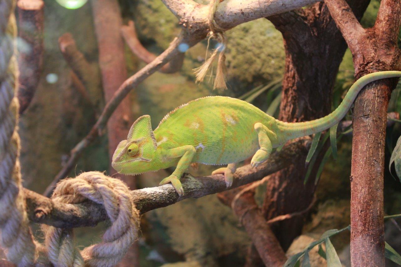 Kameleon ZOO w Bydgoszczy