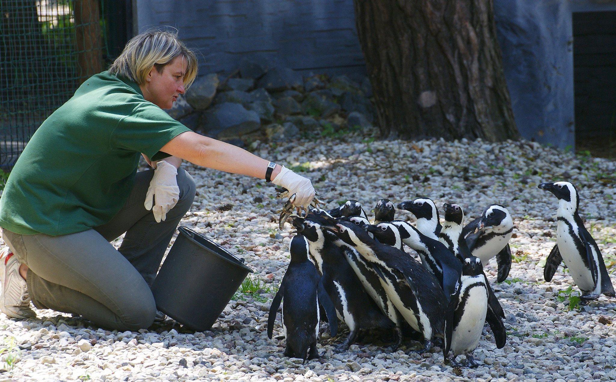 Zoo Łódź - światowy dzień pingwina
