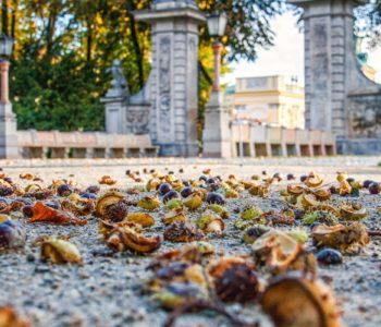Bezpłatny listopad w rezydencjach królewskich w Wilanowie