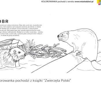 Bóbr polskie zwierzęta na kolorowance