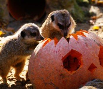 zoo łódź halloween dynia zwierzęta
