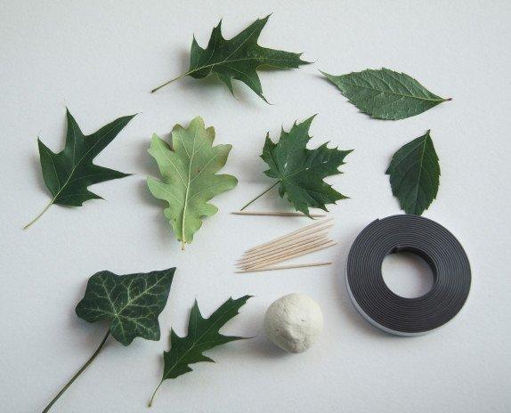 magnesy z liści