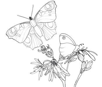 Motyle na kolorowance do druku