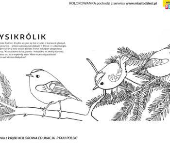 mysikrólik ptak kolorowanka