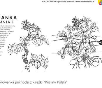 Rośliny polskie kolorowanki