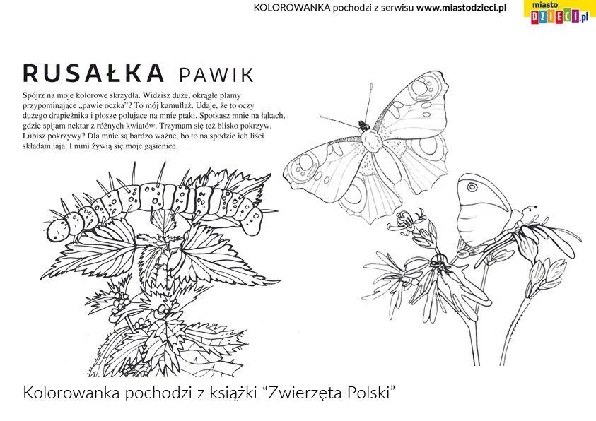 Rusałka rośliny Polski kolorowanka