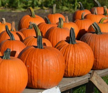 dynia jesień halloween