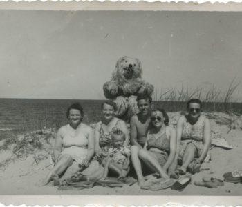 album rodzinny wystawa
