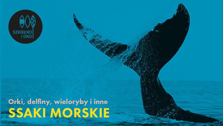 Orki, delfiny, wieloryby