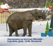 mikolajki-u-sloni