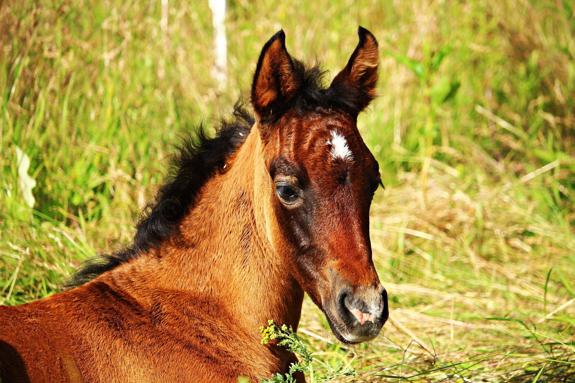 Stary kowal konie kuje