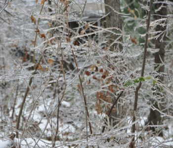 zima park ferie drzewa natura