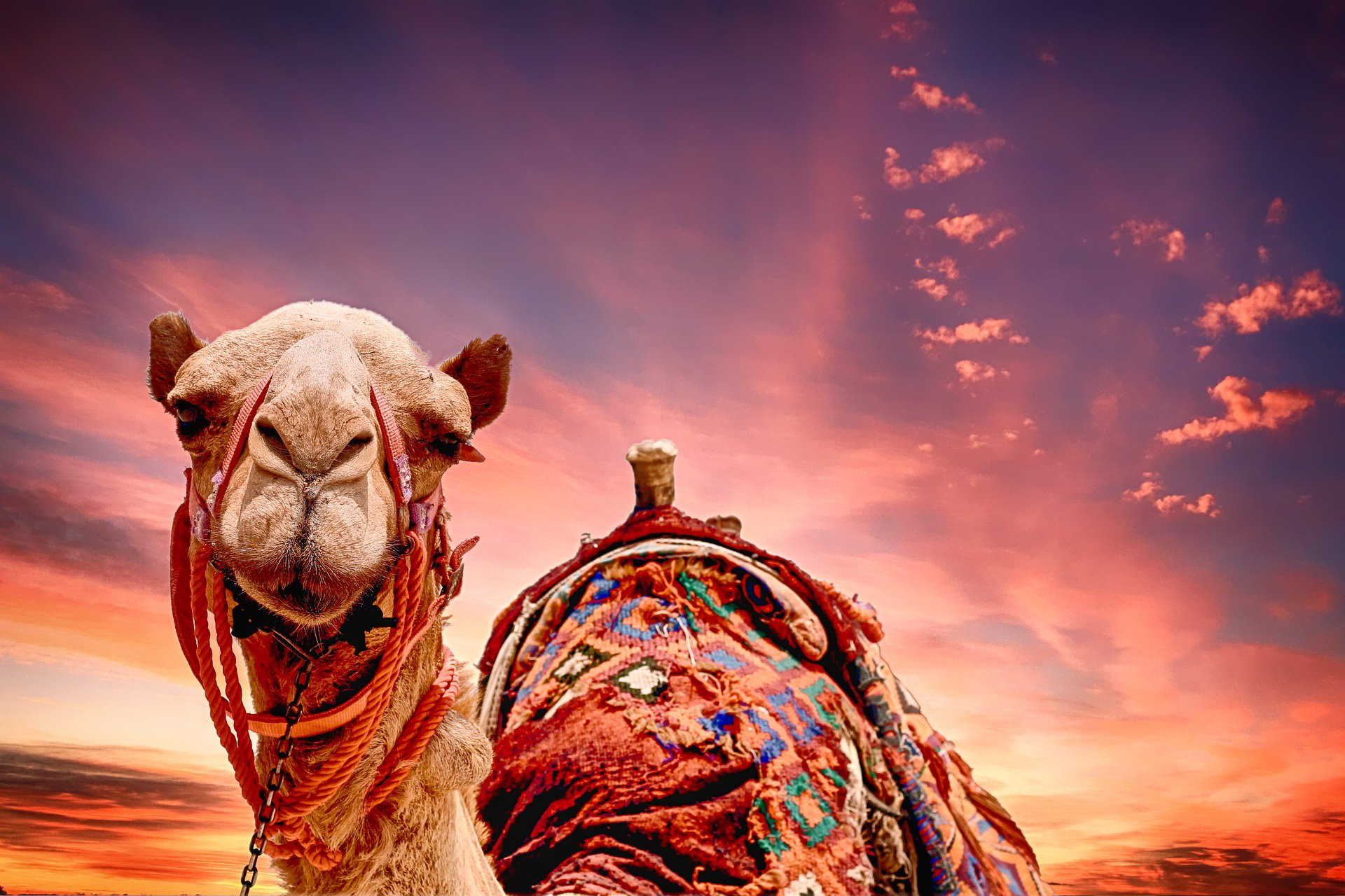 Wyprawa przez pustynię bajka dla dzieci
