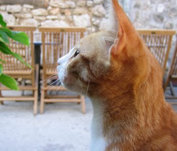 walentynki koty