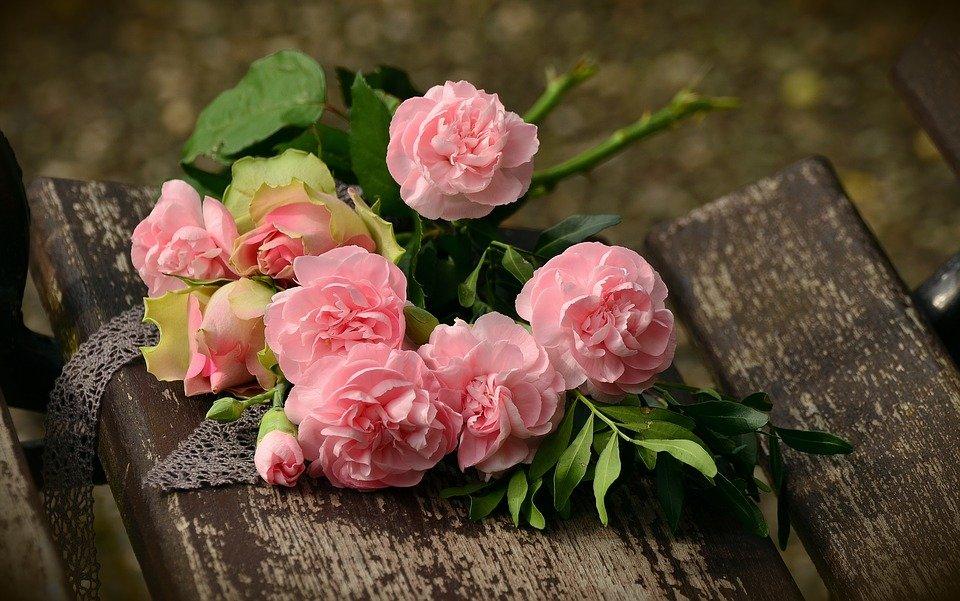 róże w bułgarii