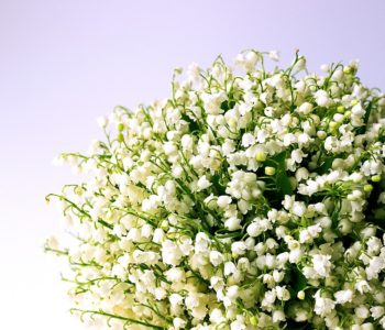 lily-of-the-valley-1693516_960_720