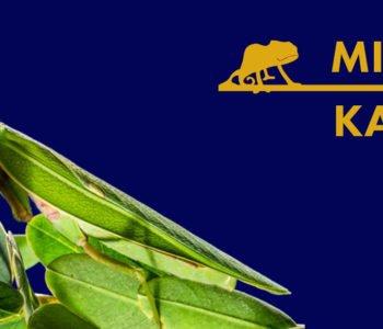 Mistrzowie kamuflażu – warsztaty przyrodnicze ze Szkiełkiem i Okiem