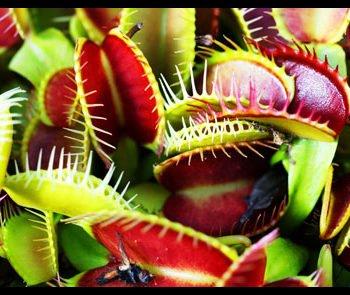 Festiwal roślin owadożernych