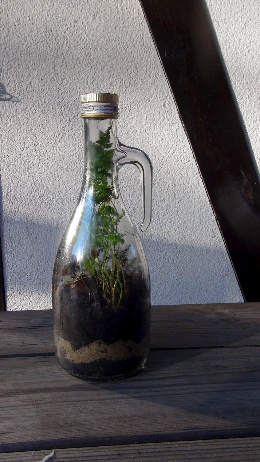 Terrarium w butelce jak to działa