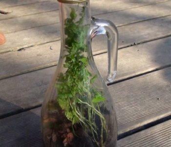 Bezobsługowy ogród w butelce (terrarium)