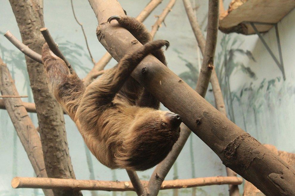 dzień leniwych spacerów w zoo