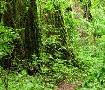 Skarby rezerwatu przyrody | warsztaty w Morysinie