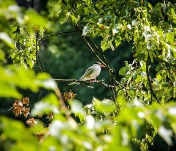 Ptasie migracje | warsztaty przyrodnicze dla rodzin