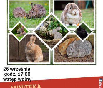 Zabawy z okazji dnia królika