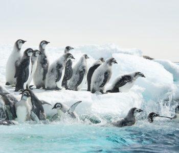 Marsz pingwinów 2017 film