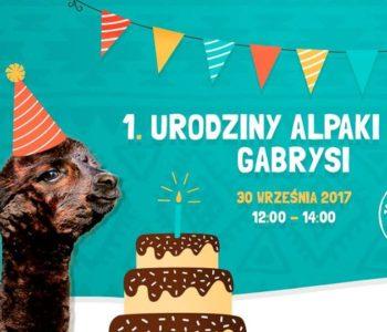 Pierwsze urodziny alpaki Gabrysi