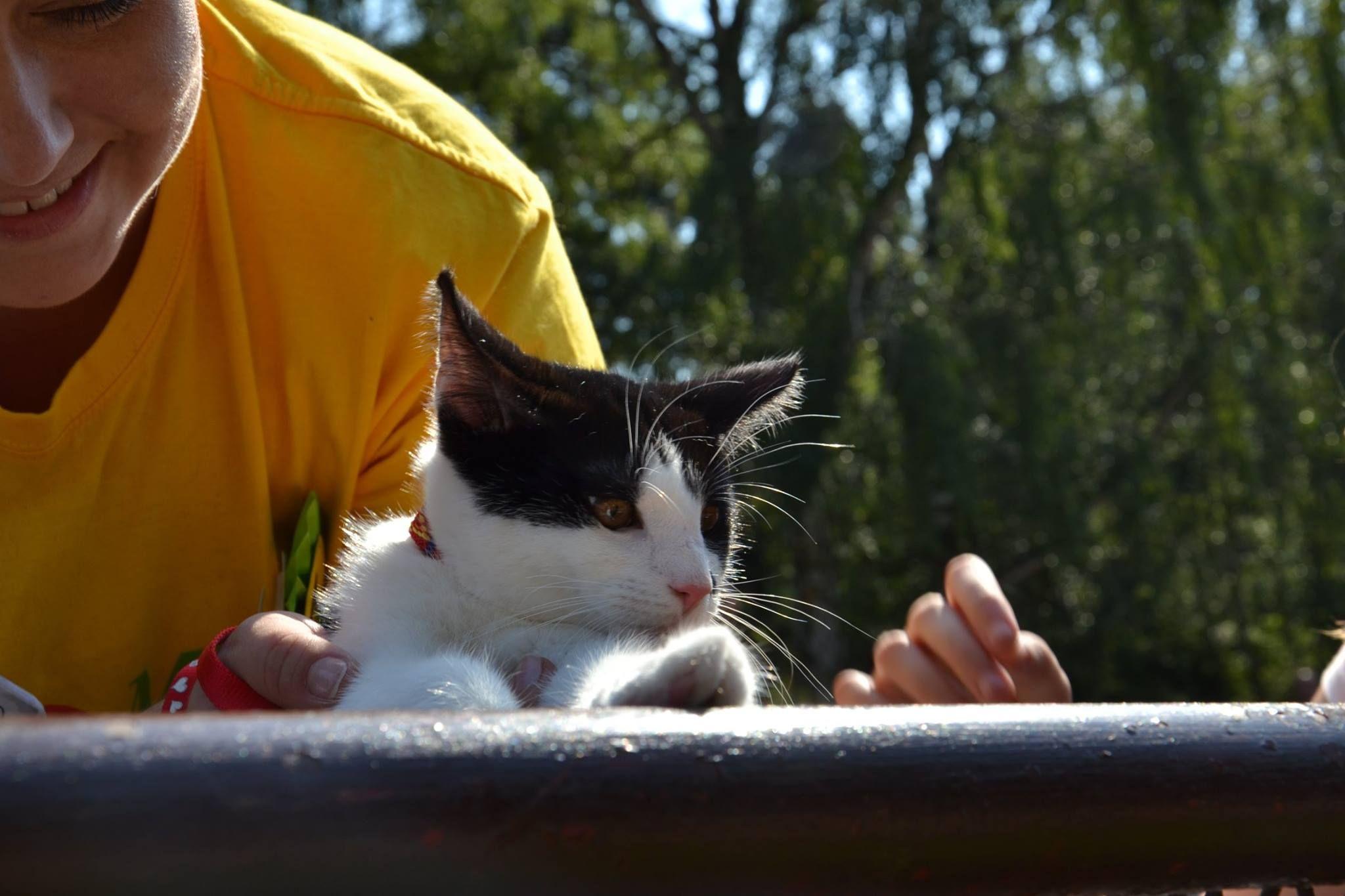 Spcer z kotami molo brzezno_schronisko Promyk (1)