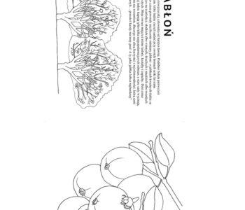Jabłoń - kolorowanka dla dzieci do ściągnięcia i wydruku
