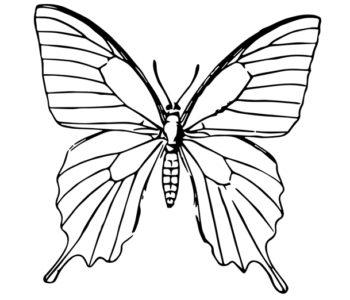 Kolorowanka z motylem do wydrukowania