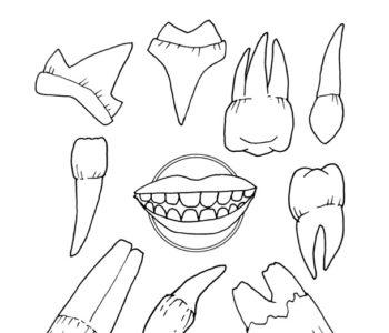 Kolorowanka do druku dla dzieci - jakie zęby ma człowiek