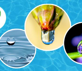 Woda – płynne eksperymenty. Warsztaty przyrodnicze ze Szkiełkiem i Okiem