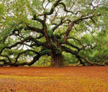Opowieść o magicznym drzewie. Zaczarowane historie z Indii