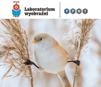 Poznaj ptasie przysmaki w Laboratorium Wyobraźni