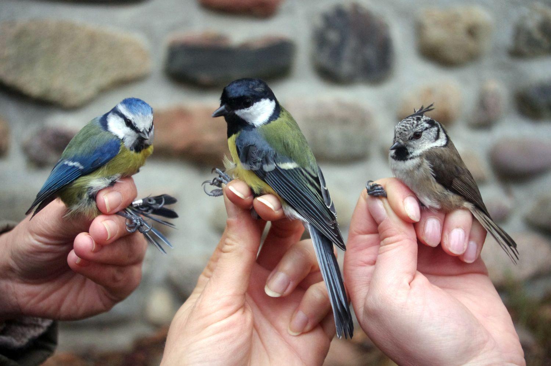 Zimowe niedziele z ptakami