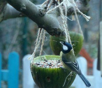 Brzdąc na zamku - dokarmianie ptaków