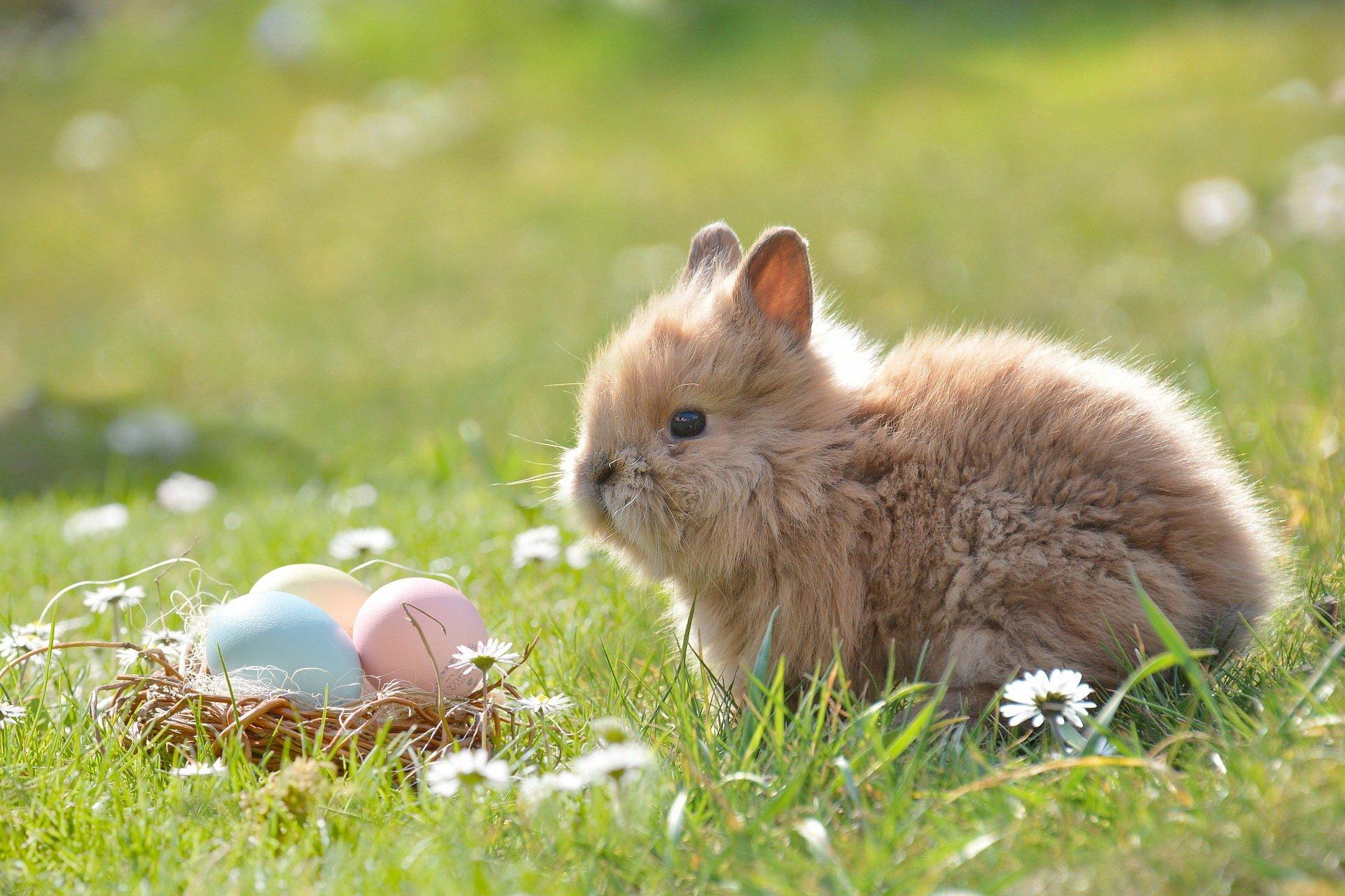 Święta Wielkanocne, piosenka dla dzieci melodia i tekst