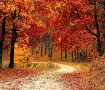 Idzie lasem Pani Jesień piosenka jesienna dla dzieci, tekst i melodia